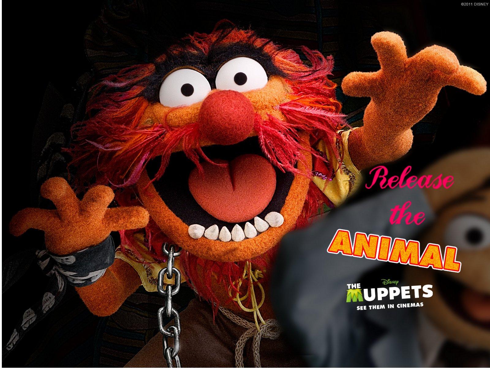 animal muppets wallpaper - photo #4